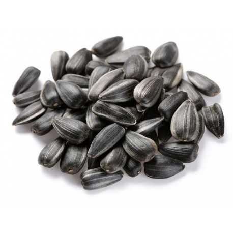 Slnečnica čierna 1kg