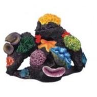 Morský koral 23x23x18cm